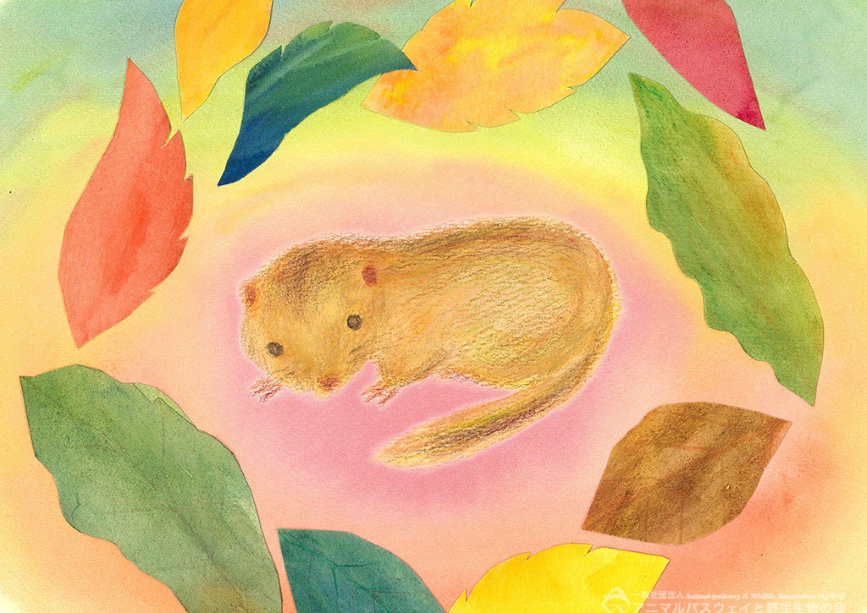 アニマルパスウェイと野生生物の会|かべ紙